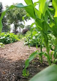 july 2014 basin u0027s garden