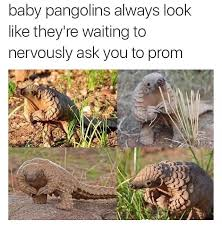 Armadillo Meme - 23 dumb memes to make you laugh funny gallery ebaum s world