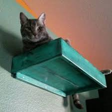wall mounted cat stairs cats pinterest cat stairs cat and