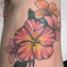 bright hibiscus flower with beautiful petals toycyte