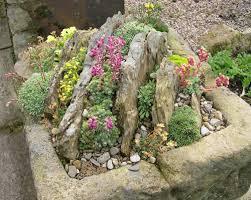 crevice garden in a trough slack top nurseries and garden west