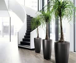 10 healthy reasons why you should decorate your home with plants