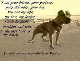 american pit bull terrier zucht pitbull philippines home facebook