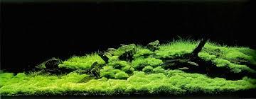 Aquascape Takashi Amano Rip Takashi Amano Album On Imgur