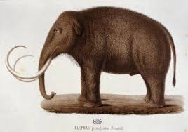 scientists aim bring mammoth