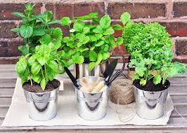 great herb garden ideas for your new sitterle garden home