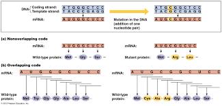 biol2060 gene expression transcription