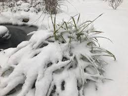 wintergarden hashtag on twitter