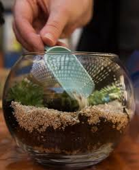 how to create your own miniature world with a trendy terrarium