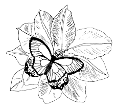 detailed butterfly coloring pages for adults butterfly coloring pages kids coloring home
