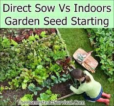indoors garden direct sow vs indoors garden seed starting the homestead survival