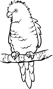 happy parrot coloring pages best coloring kids 1709 unknown