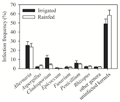 ijms free full text study of fungal colonization of wheat