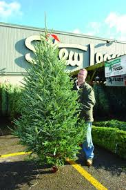 how to pick the perfect christmas tree at stew u0027s stew leonard u0027s