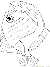 hatchet fish coloring free fish coloring pages