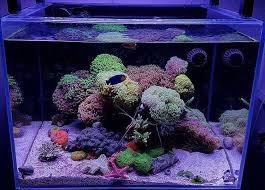 Floating Aquascape Reef2reef Saltwater And Reef Aquarium Forum - 180 best saltwater aquariums images on pinterest reef aquarium