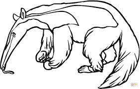 anteater coloring pages getcoloringpages com