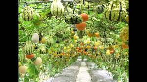 Vegetables Garden Ideas Home Vegetable Garden Ideas