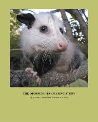 the opossum its amazing story pdf download available