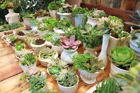 succulent centerpieces wedding succulent centerpieces diy