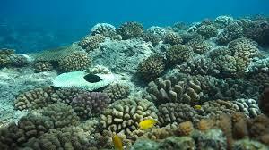 underwater scene shallow ocean floor on a fringing reef of