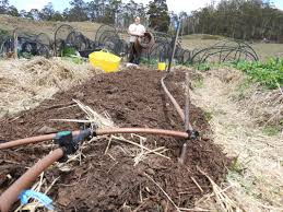 installation of drip irrigation tiger hill permaculture