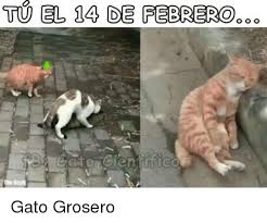 imagenes groseras de gatos tu el 14 de febrero o o o gato grosero meme on me me
