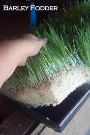 barley fodder system quartz ridge ranch