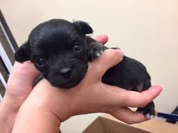 Seeking Dumpster Suspect Sought After Puppies Found In Dumpster News San Diego