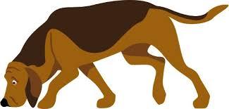 affenpinscher animal planet affenpinscher breed of the week urban dog