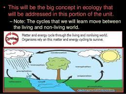 nitrogen cycle lesson powerpoint environment ecosystem biogeochemi u2026