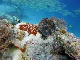 diving in zanzibar marine life picture video u2013 one ocean u2013 padi 5 star