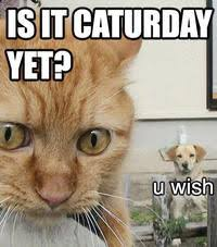Caturday Meme - caturday image gallery know your meme