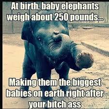 Wednesday Funny Meme - funny meme elephant lol haha but baby big stick around