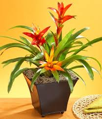 house plants that don t need light plants with purpose 5 types of greenery you need in your home
