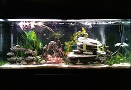 Live Plants In Community Aquariums by Aquageek U0027s Planted Tanks Photo Id 44171 Full Version