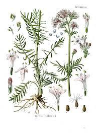 pflanzenheilkunde u2013 wikipedia