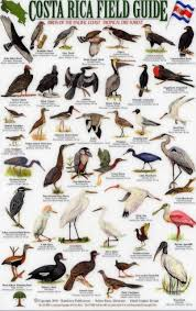 costa rica field guide birds of the pacific coast and the