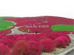 aliexpress buy park ornamental 1200 the plants big