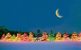 beautiful outdoor christmas trees wallpapers pics pictures