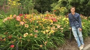 reblooming daylilies roberta s 9 scentsational reblooming daylilies page 1