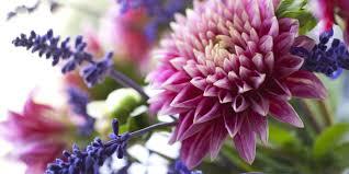Fresh Cut Flower Tips U2013 How To Make Fresh Flowers Last