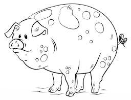 Pig Coloring Pages Free Coloring Pages Pig Coloring Pages