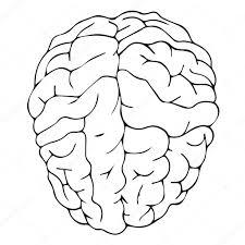 brain anatomy coloring book brain vector brain illustration brain medical brain idea brain