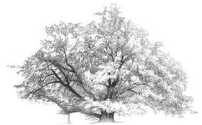 science of botanical art trees american society of botanical