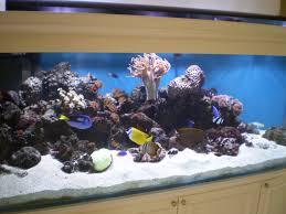 custom aquarium custom aquariums starfire eurobracing in built