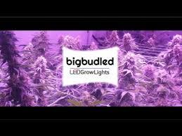 1000 watt led grow lights for sale world s first real 1000 watt led grow light for cannabis bbl1000