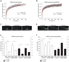 aciculin interacts with filamin c and xin and is essential for