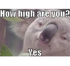Weed Meme - vibe weed week the highest happiest 4 20 memes weed meme 14