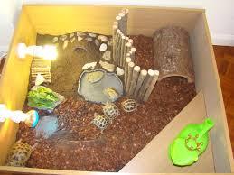 tortoise home decor decorating tortoise table shelled warriors forums